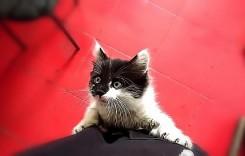 Domnule mecanic, îmi miaună mașina! O pisică a fost salvată dintr-o Honda Jazz