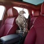 Bentley Bentayga șoim (1)