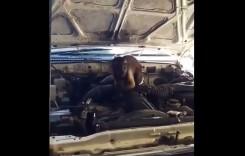 Maimuța care se crede mecanic auto