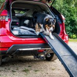 nissan-x-trail-paw-pack-4