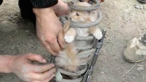 Salvată din… arcurile morții – O pisică a călătorit 80 de kilometri în suspensia unui SUV
