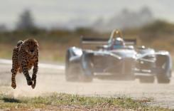 Momentul adevărului: o mașină de curse se ia la întrecere cu un ghepard