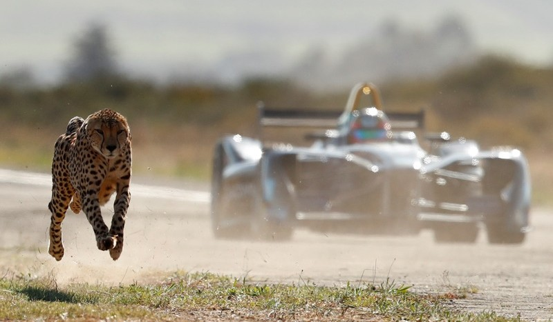ghepard vs Formula E
