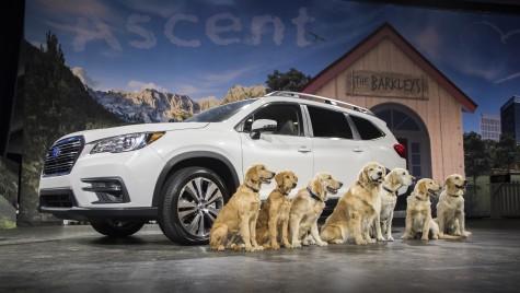 Who let the dogs out? Subaru a adus câini pe scenă ca să-și lanseze noul SUV la Los Angeles