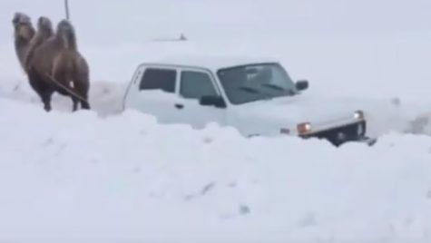 De câte cămile este nevoie pentru a scoate o Lada Niva din zăpadă?